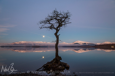 Milarrochy Bay tree
